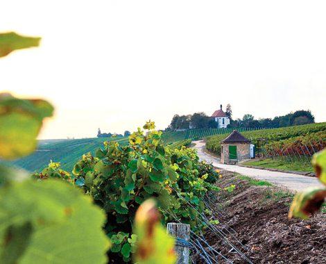 fraenkisches-weinland_mainschleife-voglsburg_WEB
